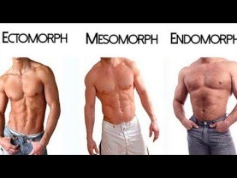 Ectomorph, Endomorph, Mesomorph ( The 3 Different Body Types )