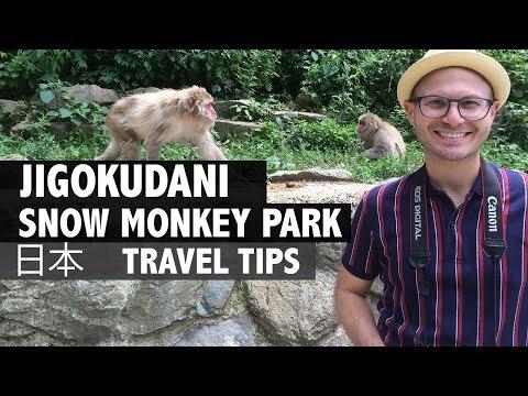 A Trip Up Jigokudani, Snow Monkey Park, Nagano, Japan!