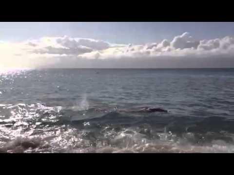 Chris Curran Swimming, Napili, Maiu, 2014
