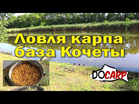 ЛОВЛЯ КАРПА Обзор база Кочеты рыбалка летом