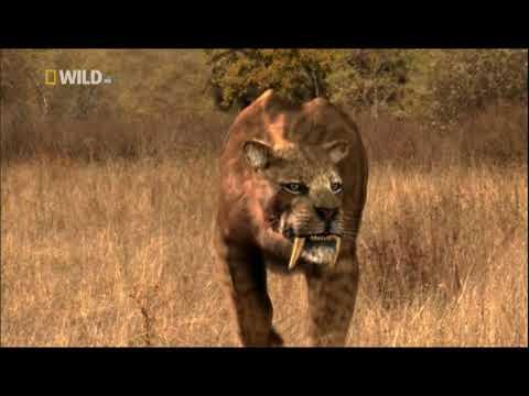 Доисторические хищники.Саблезубый тигр.Смилодон