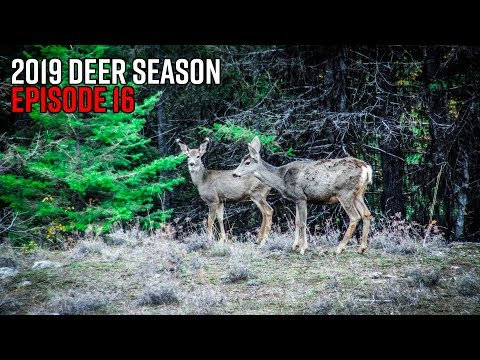 Over 40 Deer In One Day - Washington Rifle Deer Season Opener | 2019 Hunting Season EP.16