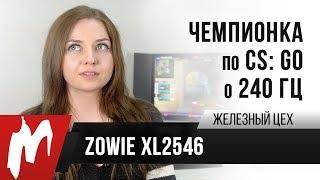 Чемпионка мира по CS GO о 240 Гц Zowie XL2546 Железный цех Игромания ОБНОВЛЕНО