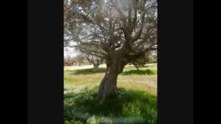 elon more- la ville juive de Naplouse