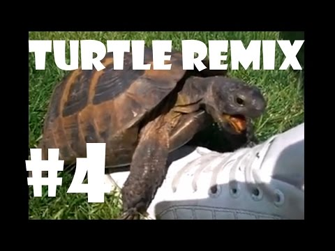Turtle Has Sex With A Shoe Remix - Compilation 4