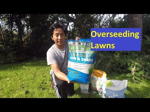 How to Overseed Your Lawn, Organic Lawncare without Pesticide