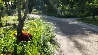로맨틱 가을. 평강랜드 가을축제