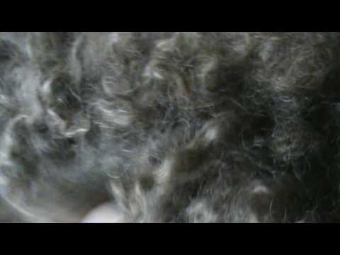 Barbet Fran�ais grooming tips