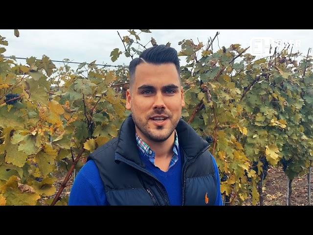 Szép borok várhatóak idén is az Egri borvidéken