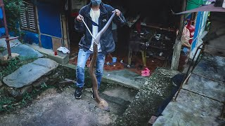 """Big Cobra in Bedroom"" 