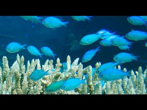 Marine Fish & Coral Importing
