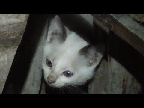 寒空の中やって来た青い瞳の野良子猫