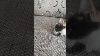 """Кошка Муся смотрит """"Звездные Войны""""!"""