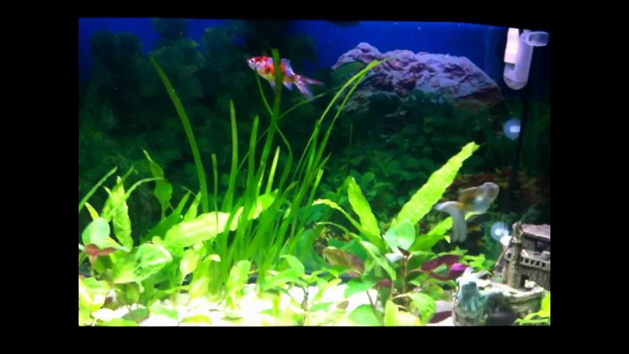 acquario per pesci rossi prezzo: mangimi per pesci ... - Acquario Per Gambusie