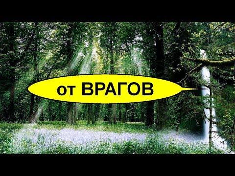 Сильный простой ритуал в лесу. Заговор от врагов и завистников на лесной поляне. Бери и делай
