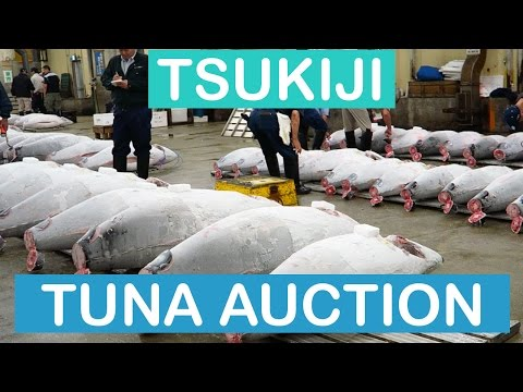 Tsukiji Market Tuna Auction 築地市場 | TOKYO JAPAN VLOG