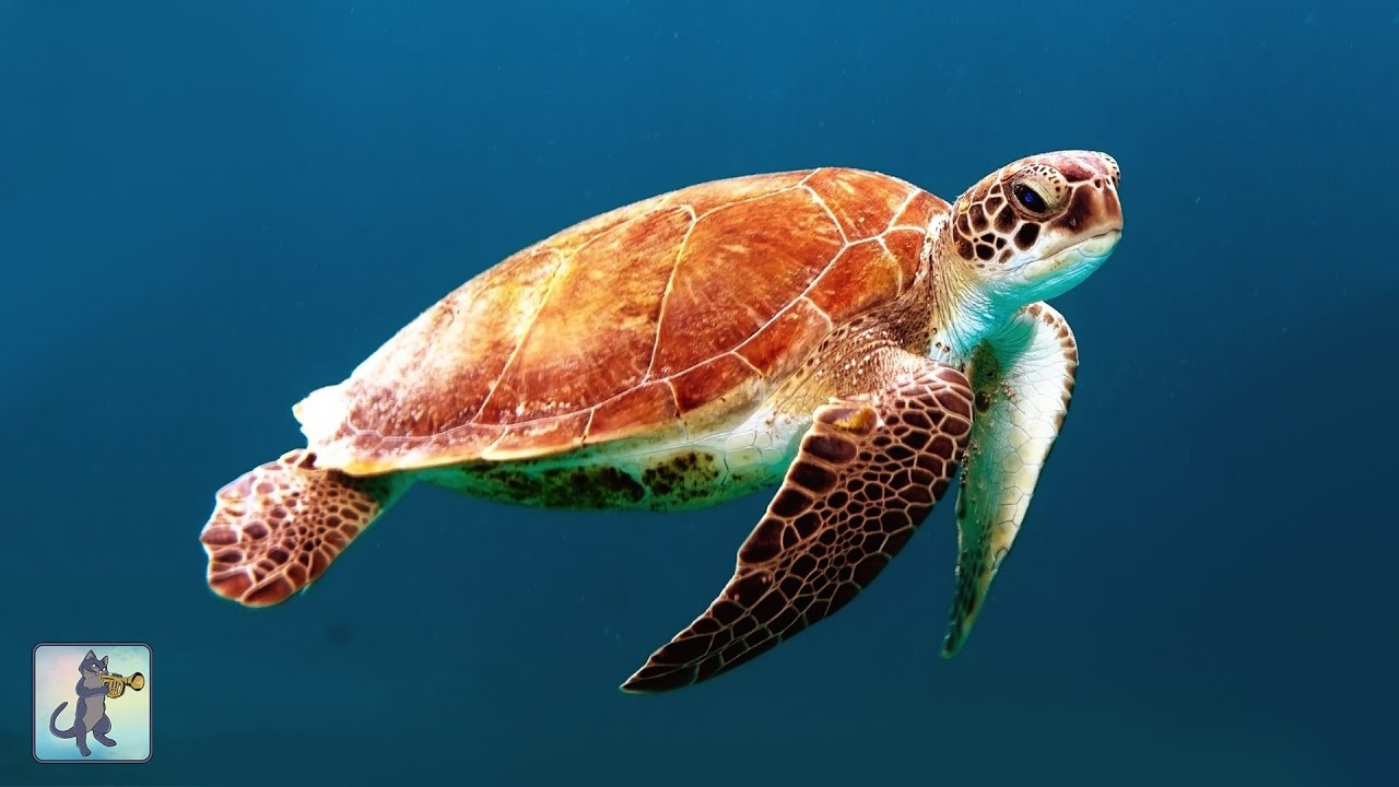GIANT SEA TURTLES • AMAZING CORAL REEF FISH • 12 HOURS of THE BEST RELAX MUSIC