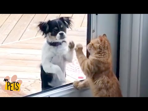Cats That Are Dogs! | The Best Cute, Funny Animal Videos Compilation #3 | AFV Pets