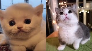 Những chú mèo con siêu dễ thương | Boss TikTok
