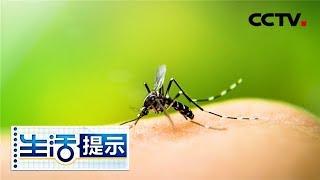 《生活提示》 20190704 如何减少蚊子叮咬?| CCTV