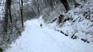 「猪を山に追いやってくれ」と猟師さんから使命を受けての雪山トレッキ...