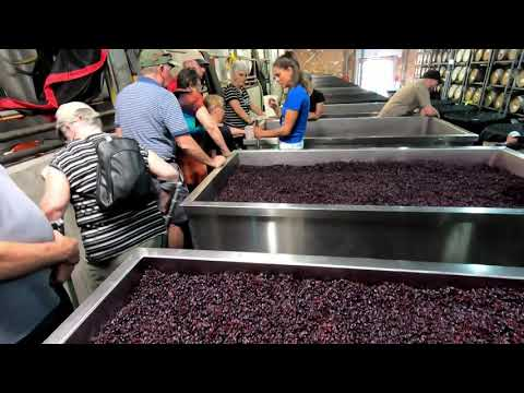 McLaren Vale Winery Experience Tour from Adelaide - Video