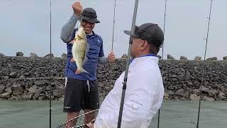 Fishing in Suriname year 2020 part 2 Bass hunting Orlando Jaman
