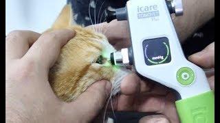 Слепой кот или нет!? Проверяем зрение у лучшего врача!