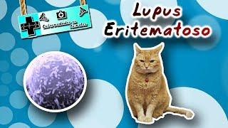 Lupus eritematoso ( El gran imitador de enfermedades ) |Enfermedades de los animales|