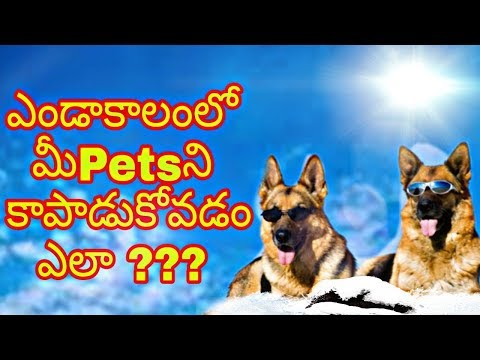 How to Take Care Your Dog In Summer In Telugu
