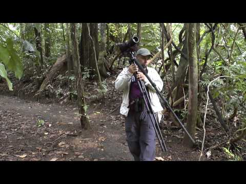 Costa Rica 2015 birding at the Arenal observatory lodge