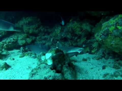 TOURNIER DIVERS - GALAPAGOS 2013 VIDEO