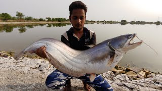Incredible Wallago Monster/Patan fish catch