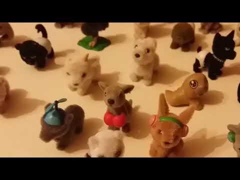 Collezione di cuccioli cerca amici