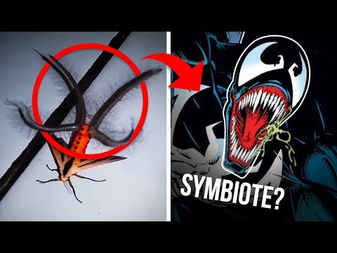 5 Strangest Mysteries Solved By Reddit And The Internet