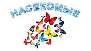 Насекомые для детей. Развивающее видео. Познаём Мир.(Благодаря онлайн уроку «Насекомые для детей» вы сможете изучить насекомых, пополнить словарный запас свое..., 2015-06-29T22:35:57.000Z)