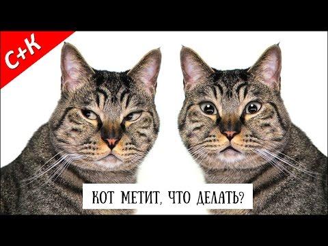 Вопрос: Если кастрировать кота, он перестанет метить?