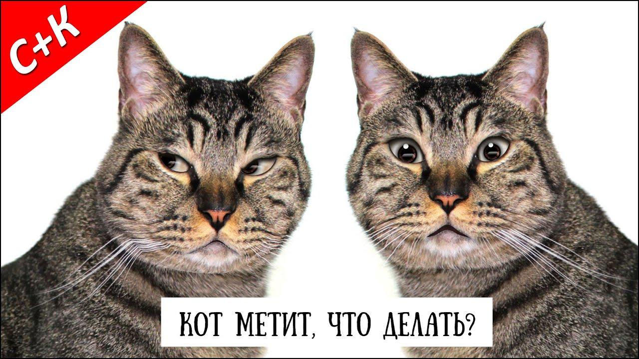 Как коты метят квартиру видео