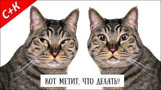 Кот метит. Что делать?(СПАСИБО ЗА ПОДПИСКУ! Кот метит. Знакомая проблема? Почему коты метят? Что делать? Некоторые советы от кота., 2016-01-17T17:52:54.000Z)