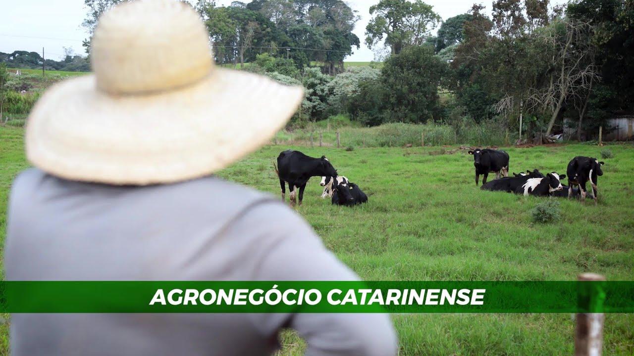 Agronegócio Catarinense