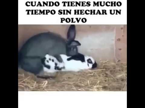 videos de sexo en español un buen polvo