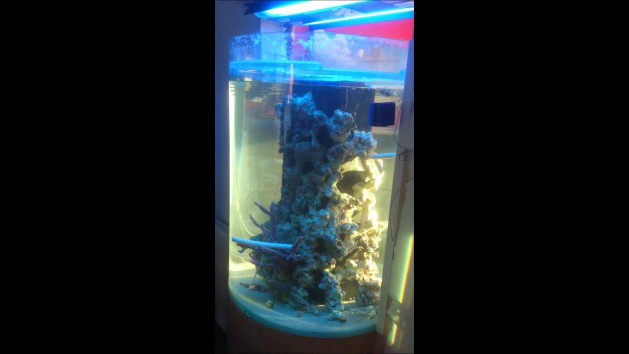 My custom cylinder marine aquarium youtube for Cylindrical fish tank