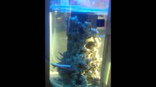 My Custom Cylinder Marine Aquarium