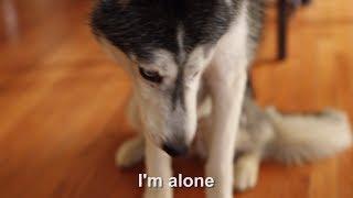 Mishka the Talking Husky is Feeling Lonely :(