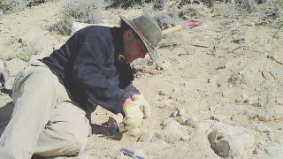 Wissensmix: Was macht eigentlich ein Paläontologe?