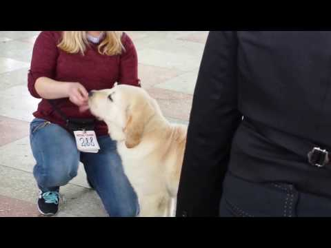 Borovuha: Central Asia Shepherd Dog, Baby class. Боровуха: среднеазиатская овчарка, класс беби