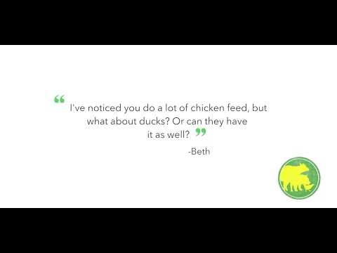 Duck Feed