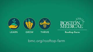 BMC Bees on the Rooftop Farm