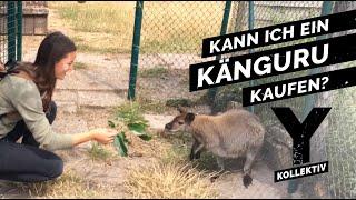 Das Geschäft mit exotischen Tieren – Was ist erlaubt?