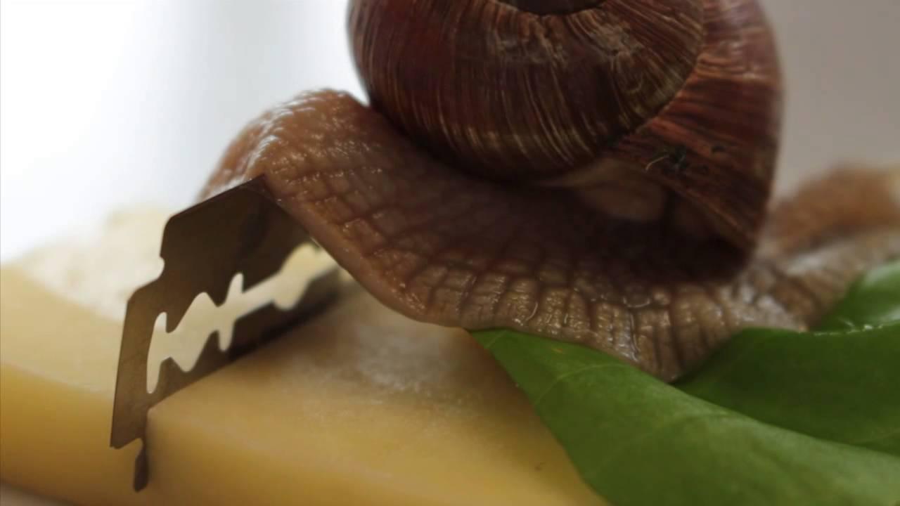 csiga és körféreg készítmények
